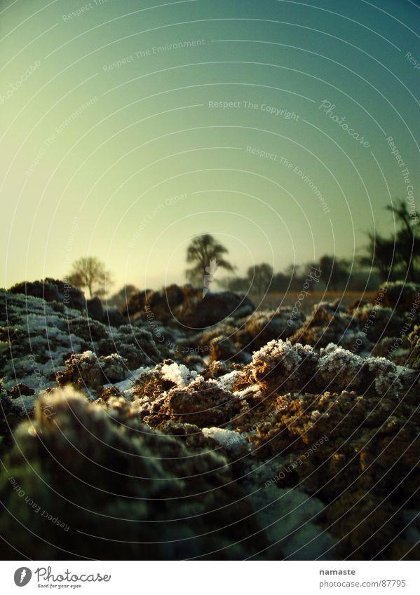 frosty grün kalt Sonnenlicht Gras Makroaufnahme Raureif Untergrund Erde beerdigen Wiese Frost Weide Bodenbelag frostgefühl kältegefühl Erdnähe mutterboden