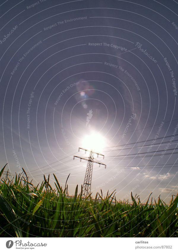 Solarenergie Sonne blau Gras Wetter Energiewirtschaft Wissenschaften Sonnenenergie aufwärts Strommast ökologisch blenden Ameise Oberleitung