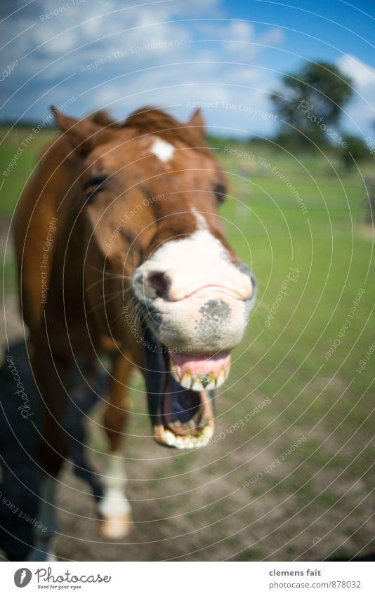 Heute schon gelacht? Pferd Gebiss Pferdegebiss Weide lachen wiehern Mund Kopf Pferdekopf Kauen Zahnfleisch