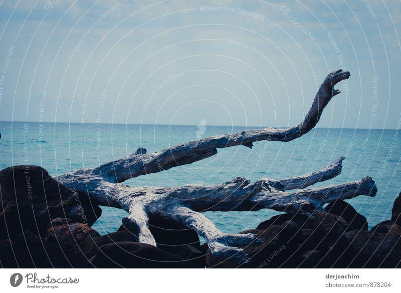 Gestrandet Ferien & Urlaub & Reisen Wasser Sommer Meer ruhig Freude Strand Umwelt grau Holz Stein außergewöhnlich Horizont Insel beobachten Schönes Wetter