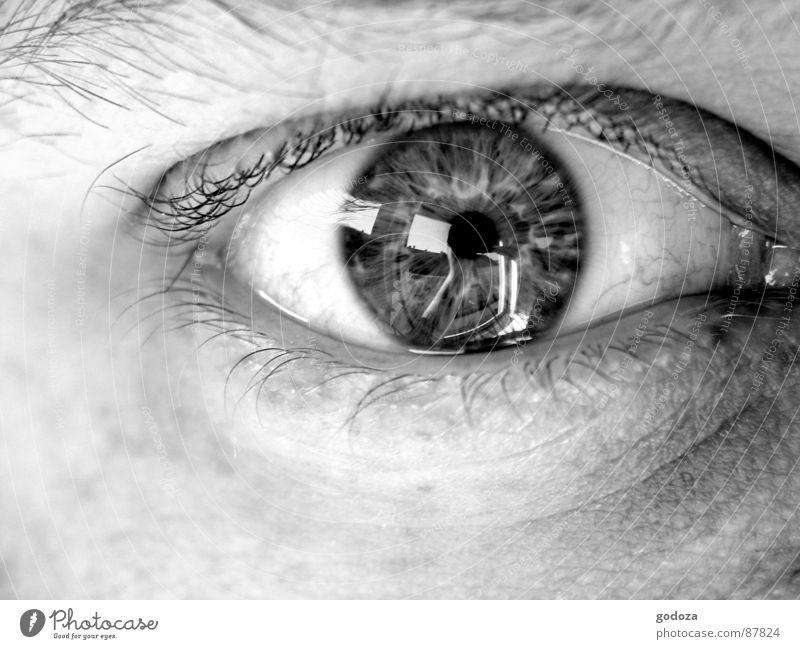 Augenblick 1 Pupille Gefühle Augenzeuge Publikum heften fixieren Einblick Makroaufnahme Nahaufnahme Regenbogenhaut Schwarzweißfoto einen blick werfen in