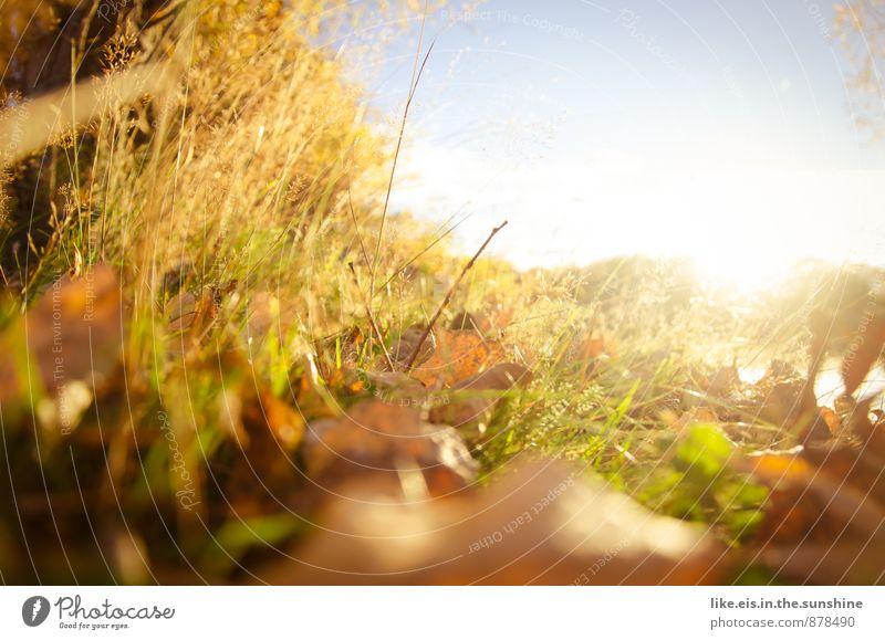 Igel- blick Natur Landschaft Blatt Umwelt Herbst Herbstlaub herbstlich