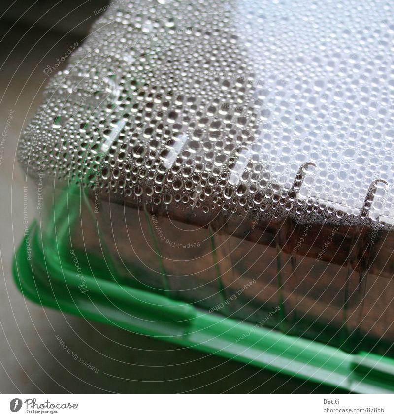 Biosphäre IV Natur Wasser grün Pflanze Umwelt Erde braun Freizeit & Hobby Klima Wassertropfen Wachstum Kunststoff feucht gießen Quelle Aussaat