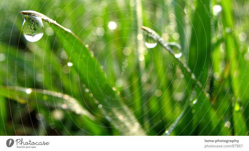 Feld der Tränen II Gras nass Halm Wiese grün Frühling Sommer Blumenwiese Landwirtschaft Ackerbau Viehweide Umwelt sommerlich saftig Pflanze Botanik Regen