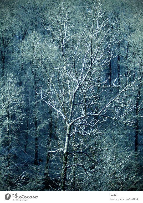 Eiskalt erwischt Hagel Wald Raureif Holz Schneelandschaft Märchen Zucker süß Baumstamm Wäldchen Stuttgart Schneesturm Winter verzuckert Feenland White Christmas