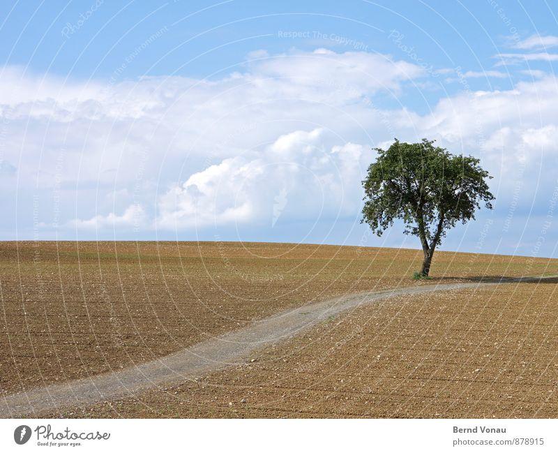 einbaum Natur Landschaft Erde Himmel Wolken Sonnenlicht Sommer Schönes Wetter Pflanze Baum Feld positiv blau braun grün Wege & Pfade einzeln aufwärts Ordnung