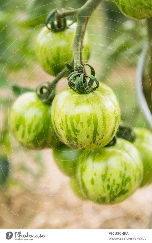 grün gestreifte tomaten in garten Lebensmittel Gemüse Gesunde Ernährung Freizeit & Hobby Sommer Garten Natur Pflanze Streifen tomato food striped agriculture