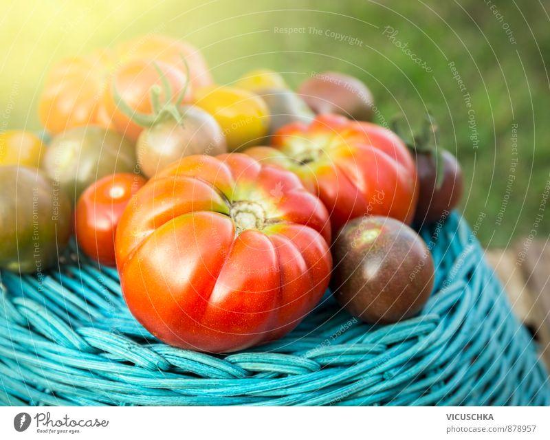 Tomaten Ernte auf dem blauen Korb in Graten Natur blau Pflanze grün Sommer Sonne rot gelb Leben Herbst Freiheit Hintergrundbild Garten Verschiedenheit Tomate Korb