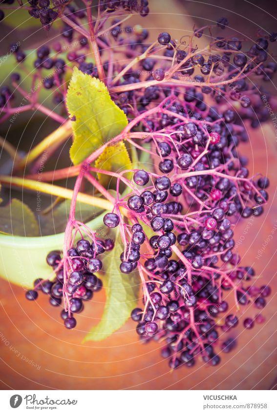 Holunder Zweig mit Beeren, toning Natur Pflanze Sommer gelb Herbst Hintergrundbild Garten Freizeit & Hobby Lifestyle Frucht Ernährung planen Bioprodukte altehrwürdig Vitamin Nutzpflanze