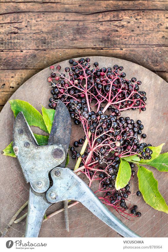 Holunder beeren mit Blätter und vintage Gartenschere Natur Pflanze grün Sommer Baum schwarz Hintergrundbild braun Lebensmittel Freizeit & Hobby Lifestyle Frucht