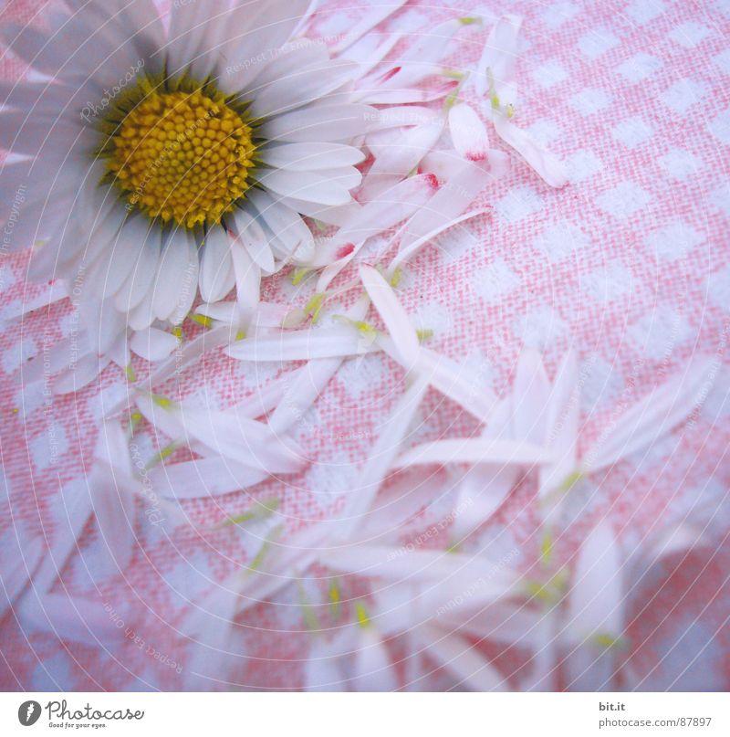 MÄDCHENBLÜMCHEN IV Philosoph Wiese Romantik rosa Gänseblümchen Frühling Alm Waldlichtung Hippie Bergwiese Schundroman Blumenstrauß Dorfwiese Schwärmerei