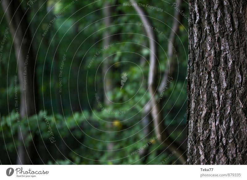 Waldgrund Natur Pflanze Sommer Baum Landschaft Umwelt Stimmung springen Abenteuer Baumstamm Baumrinde