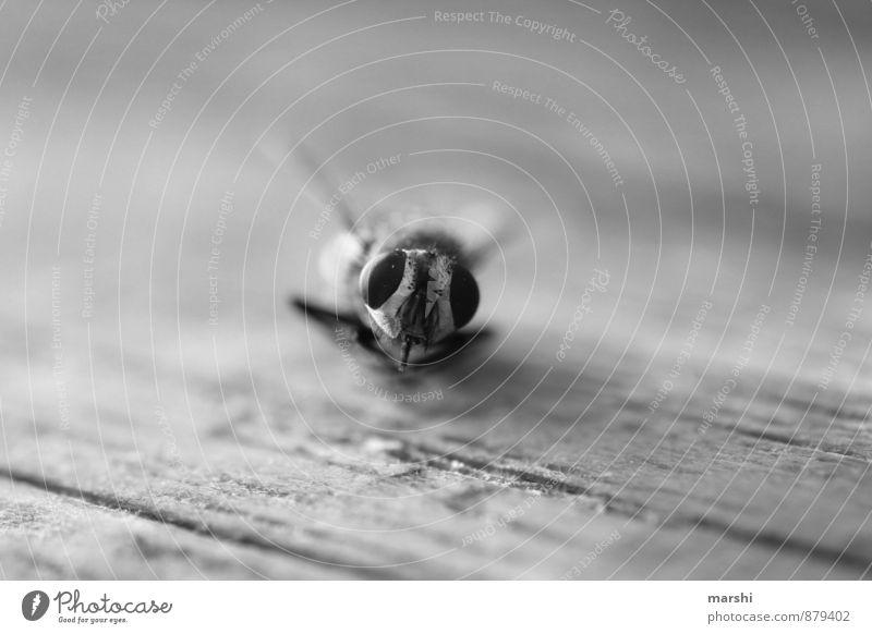 Bruchlandung Tier 1 weiß Fliege Auge Tierporträt Schwache Tiefenschärfe Schwarzweißfoto Nahaufnahme Detailaufnahme Makroaufnahme