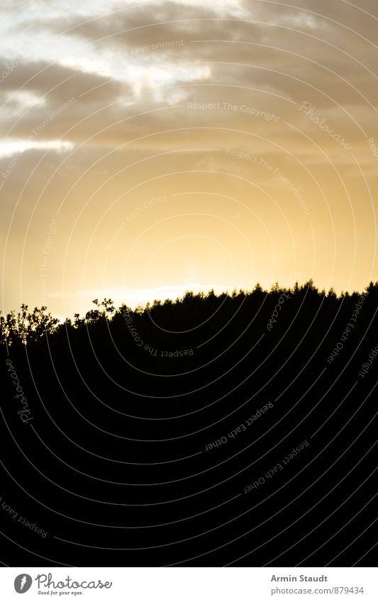 Sonnenuntergang hinterm Wald Himmel Natur Ferien & Urlaub & Reisen schön Sommer Landschaft Wolken Ferne schwarz dunkel Umwelt gelb natürlich hell