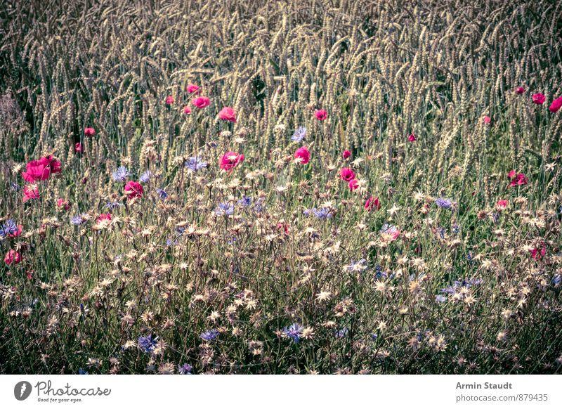 Feldblumen Natur Pflanze Sommer Blume Landschaft Umwelt Gesunde Ernährung Wiese Frühling natürlich Gesundheit Stimmung Wachstum Zufriedenheit authentisch