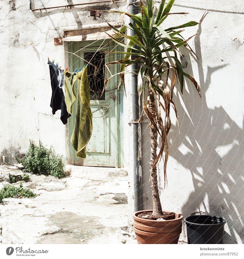 Griechische Lein Pflanze Ferien & Urlaub & Reisen Tür heiß Eingang Palme Schönes Wetter Wäsche Griechenland Tuch Topf Haushalt trocknen aufhängen Wäscheleine