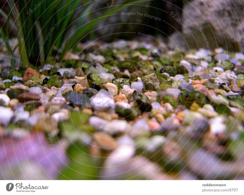 Aquariumboden Kieselsteine Wasser Unterwasseraufnahme Stein