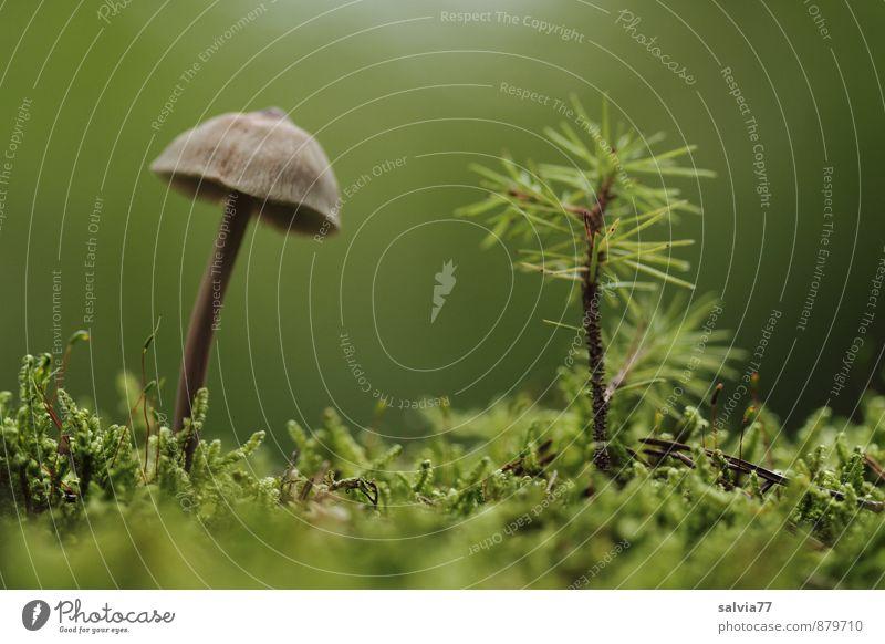 Wald Bambini Natur Pflanze Erde Sommer Herbst Baum Moos Grünpflanze Nutzpflanze Pilz stehen Wachstum dünn Zusammensein natürlich niedlich braun grün ruhig