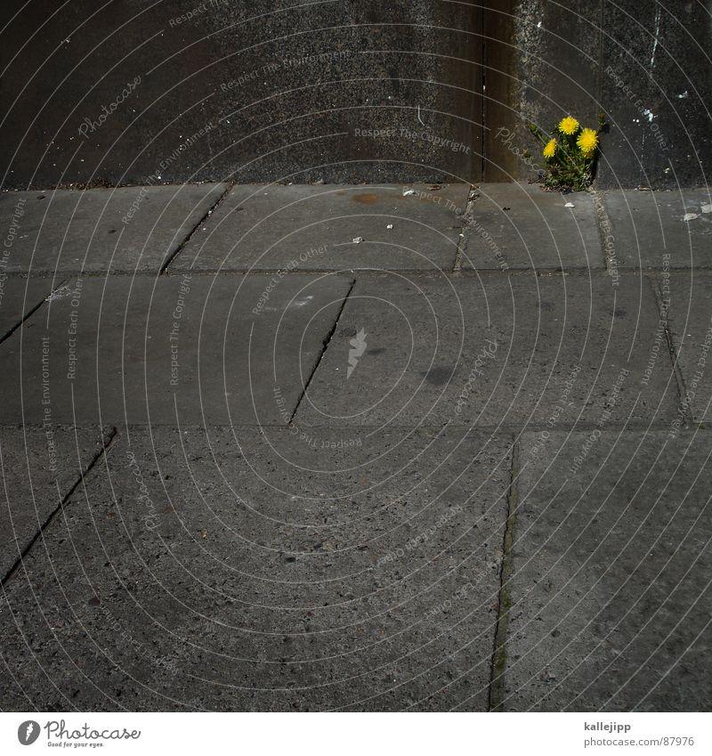 mauerblümchen Tod Blume Löwenzahn trüb Selbstständigkeit Stadt Wand Natur gelb Blühende Landschaften Osten Ödland Frustration Wachstum Blumenbeet Beton Trauer