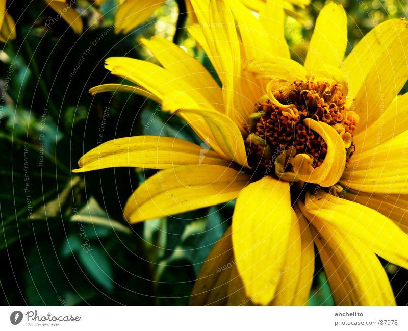In Motion Blume Natur Blüte gelb Makroaufnahme schwarz Hintergrundbild Staubfäden grün Spannung Blühend Umwelt Gefühle Nahaufnahme Pollen Blütenstempel Frühling