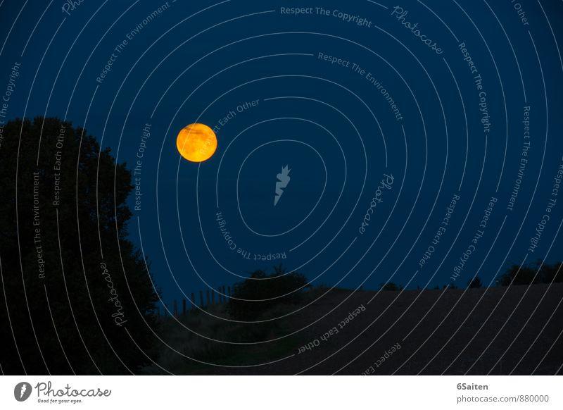 Käsekuchenmond Natur Landschaft Himmel Nachthimmel Mond Vollmond leuchten ästhetisch außergewöhnlich groß hell rund blau gelb gold Warmherzigkeit ruhig Reinheit