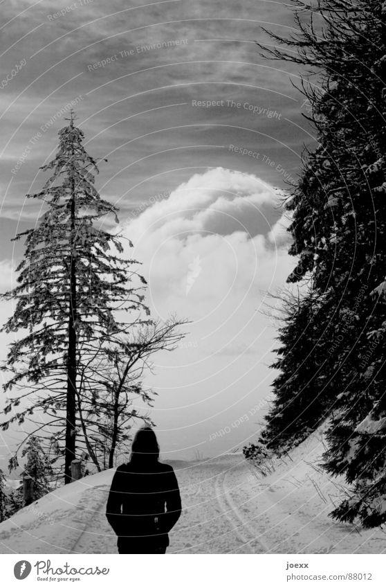Wo gehst du hin? Frau Himmel Natur Winter Einsamkeit Wolken ruhig Wald Ferne Schnee Denken gehen Angst laufen Spaziergang Klarheit
