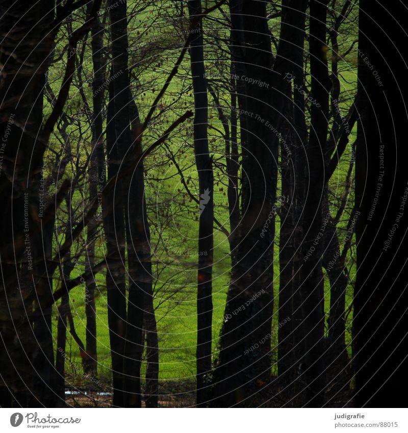Wald Natur grün schön Blatt schwarz ruhig Umwelt Wiese Gras Baumstamm Märchen Wildnis Waldboden Buche Waldwiese