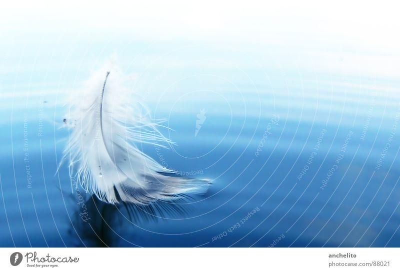 Federleicht See Meer Licht weich Segeln ruhig Frieden Wasser Vogel light as a feather feathery die leichtigkeit des seins water ocean sea lake blue white