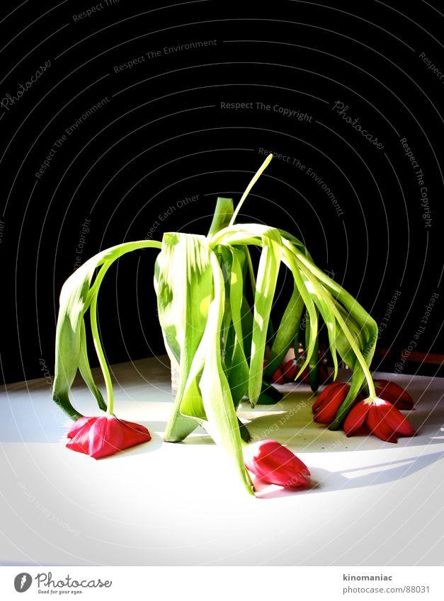 den Kopf mal hängen lassen Natur alt Pflanze Farbe Erholung Blume rot ruhig Wärme Traurigkeit Blüte Gefühle Erde Raum Trauer Blumenstrauß
