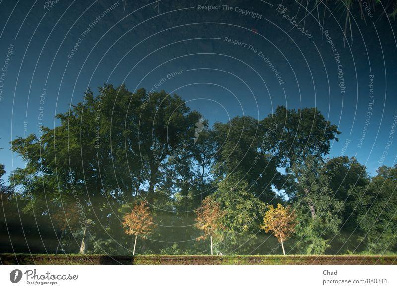 Drei Kleine Umwelt Natur Landschaft Pflanze Wasser Himmel Wolkenloser Himmel Sommer Baum Sträucher Blatt Grünpflanze Park Teich See Erholung träumen ästhetisch