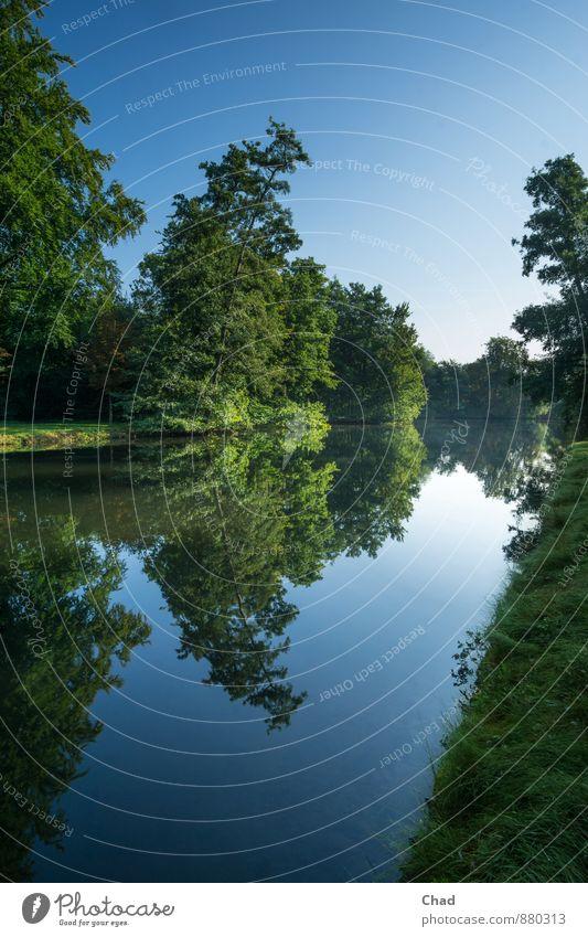 Morgen Spiegelung Umwelt Natur Landschaft Pflanze Wasser Himmel Wolkenloser Himmel Sommer Schönes Wetter Baum Gras Sträucher Park Seeufer Teich Erholung