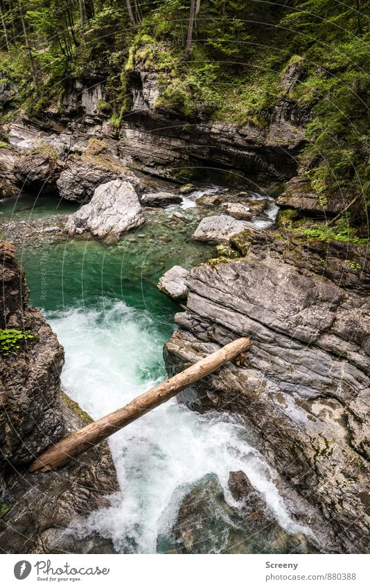 In der Klamm #1 Natur Landschaft Pflanze Wasser Sommer Baum Sträucher Moos Wald Felsen Alpen Berge u. Gebirge Schlucht Breitachklamm nass braun grau grün Kraft