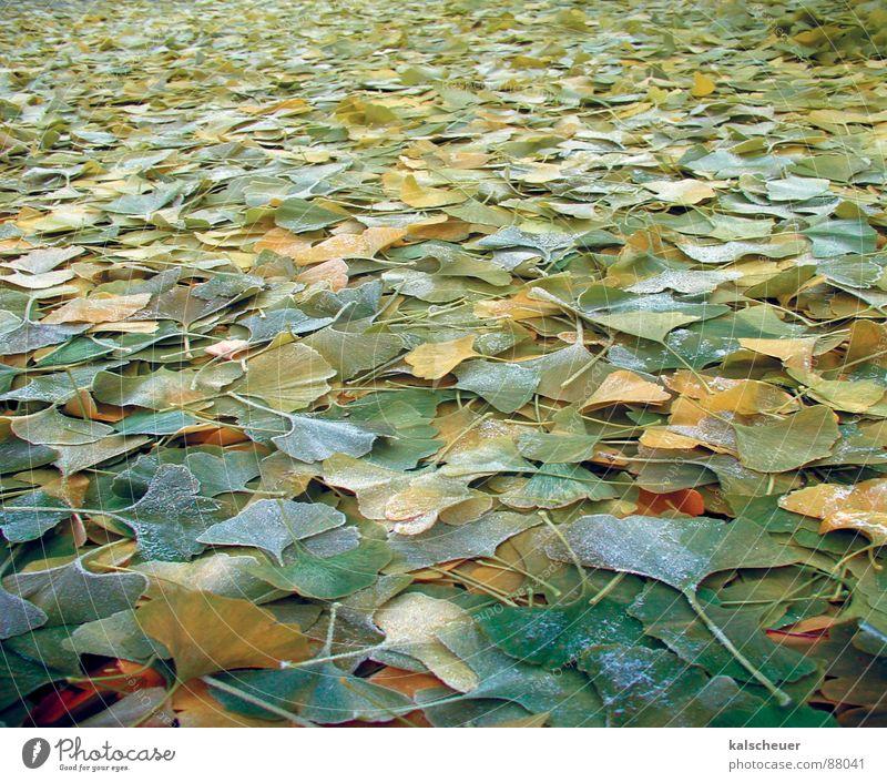 Ginkoherbst 1 grün Blatt Herbst Hintergrundbild Bodenbelag Unendlichkeit Ginkgo