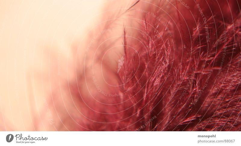 zarter Federflaum Tier Flaum weich kuschlig fein gemütlich ruhig besinnlich Schal Bekleidung Innenaufnahme federartig Tracht Freude blitzen sensibel