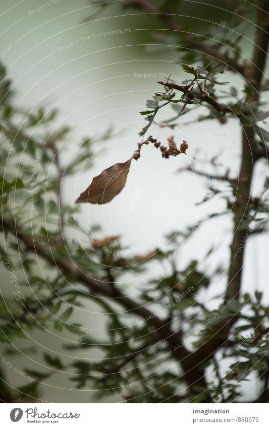 Vom Werden und Vergehen Natur Pflanze Herbst Baum Blatt alt einzigartig braun grün Akzeptanz Gelassenheit Trauer Tod Schmerz Sehnsucht Einsamkeit Senior Ende