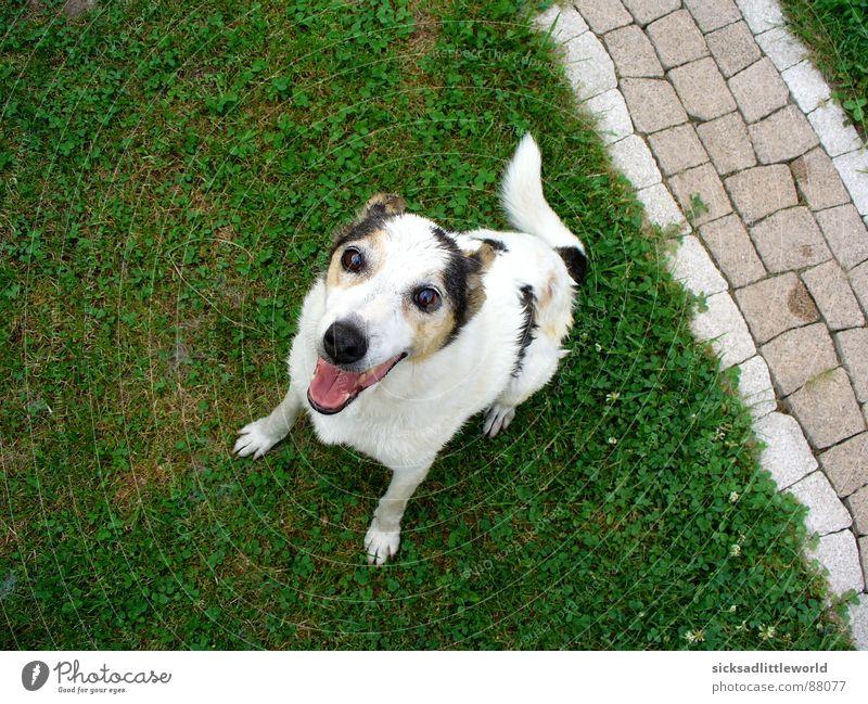 Hallo! Sommer Freude Tier Wiese Gras Garten Rasen Säugetier Erwartung Hund Mischling