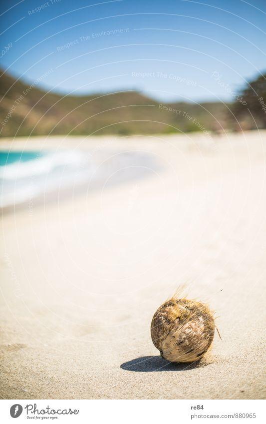 Wer hat die Kokusnuss geklaut? Ferien & Urlaub & Reisen Himmel (Jenseits) Sommer Strand Freiheit Wellen Ernährung Leichtigkeit Sandstrand Sinnesorgane Faser