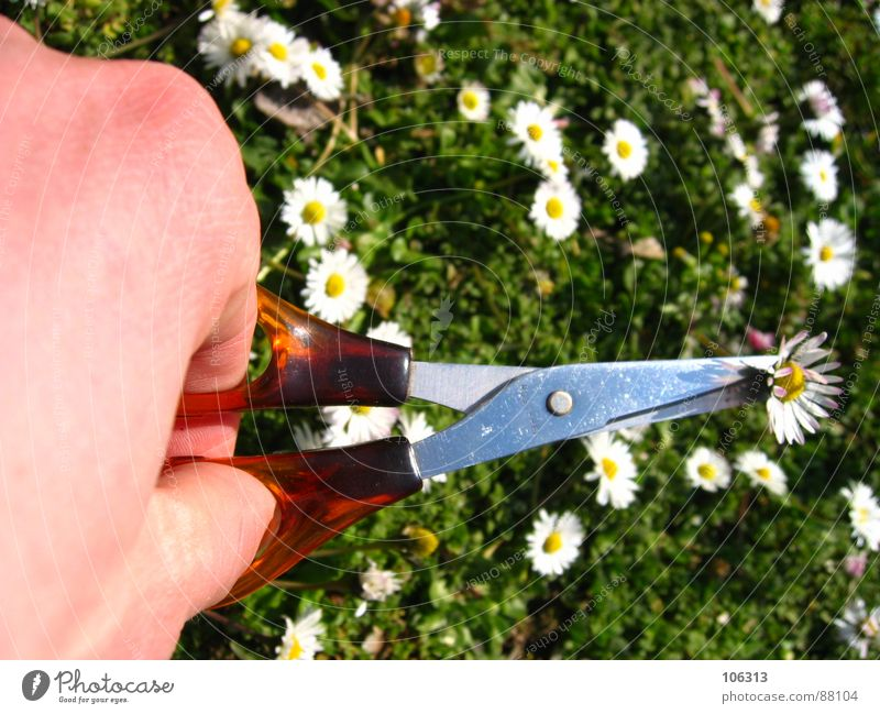 SCHLUSS MIT LUSTIG Natur Hand Wiese Frühling Umwelt Aktion Macht Lebewesen Gänseblümchen Werkzeug Trennung Biologie Reaktionen u. Effekte geschnitten Schere