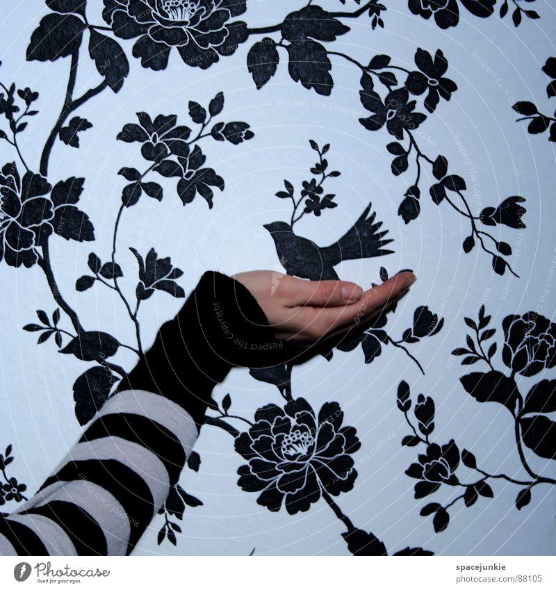 Flieg, kleiner Vogel! Frau Natur Hand Blume Liebe Freiheit Blüte fliegen Finger Sicherheit Schutz festhalten Tapete Geborgenheit Halt Wildnis