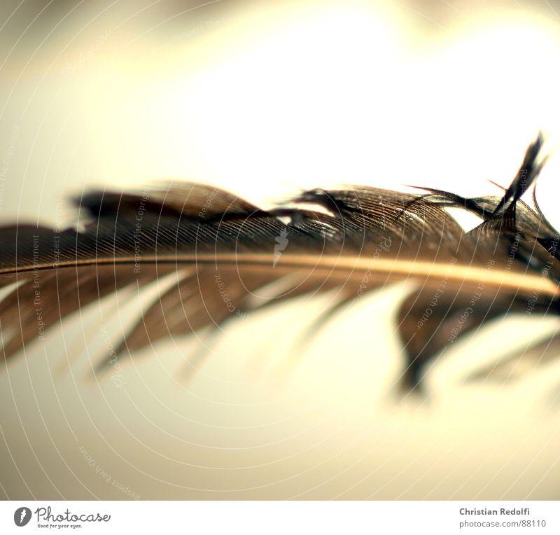 Feder 1 gelb Vogel braun kaputt Schweben Leichtigkeit Furche filigran Lamelle