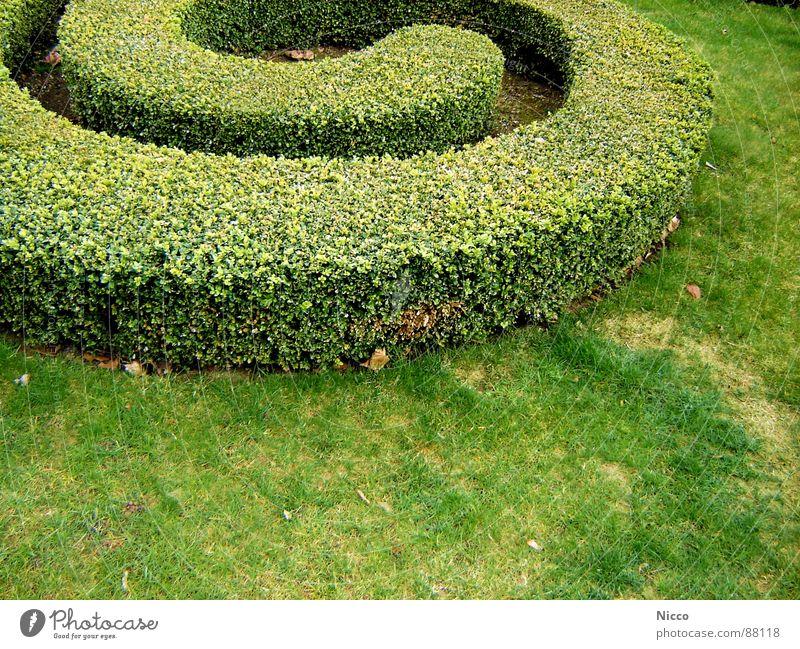 Werdender Irrgarten Blatt Gras Wiese Sträucher Wachstum Frühling Außenaufnahme Garten Vergnügungspark Stauden Sportrasen Hecke Erde Grasland grün Buchsbaum