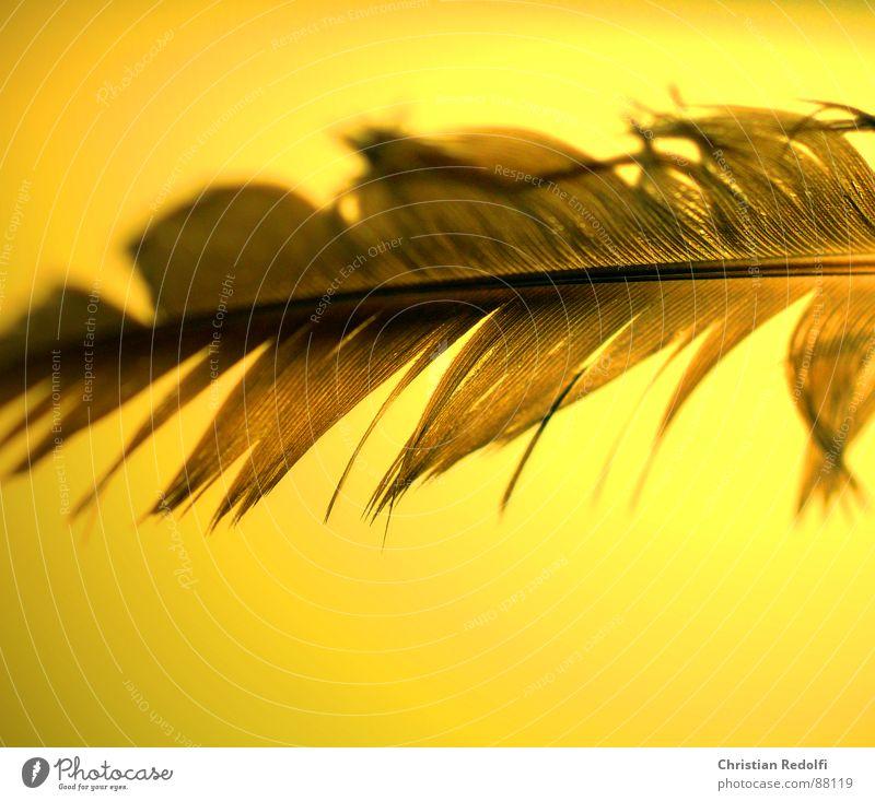 Feder 2 gelb Vogel braun kaputt Schweben Leichtigkeit Furche filigran Lamelle