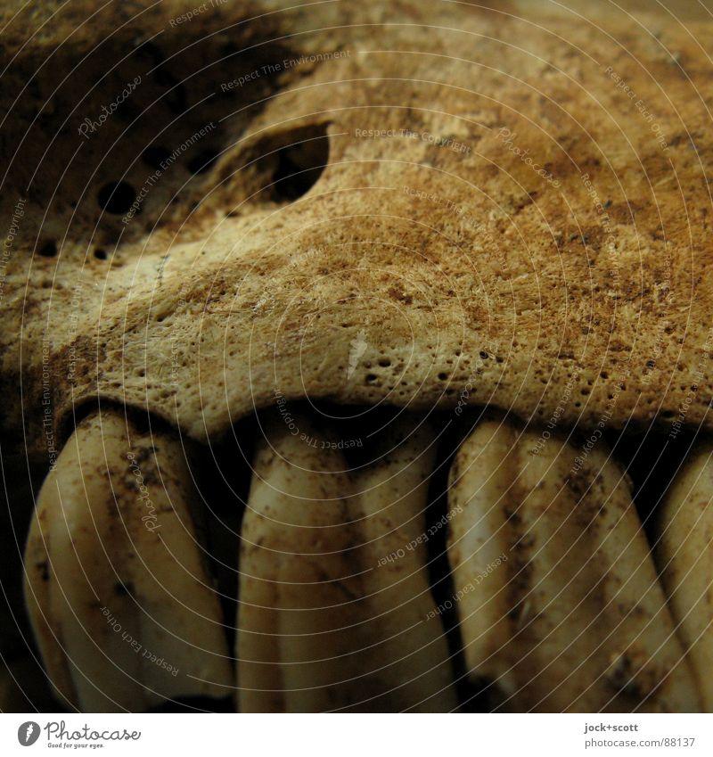 Zähne Zeigen alt blau Tier Tod authentisch bedrohlich Zukunft Vergänglichkeit Ende Gebiss gruselig Reihe Furche hässlich Spalte Skelett