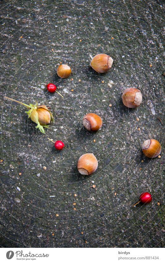 Spätsommerfunde schön Sommer rot Herbst braun ästhetisch Beeren positiv Originalität Nuss Haselnuss Vogelbeeren Frucht Haselnusskern