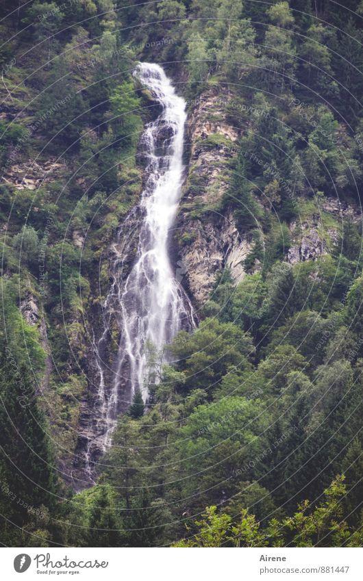 im freien Fall Natur grün Wasser Landschaft Wald Berge u. Gebirge Bewegung grau Freiheit Felsen Kraft authentisch Energie bedrohlich Urelemente Abenteuer