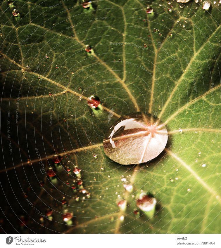 Kleine Welt Umwelt Natur Pflanze Wassertropfen Blatt leuchten hell klein nah nass grün rot ruhig Idylle Farbfoto Nahaufnahme Detailaufnahme Makroaufnahme Muster