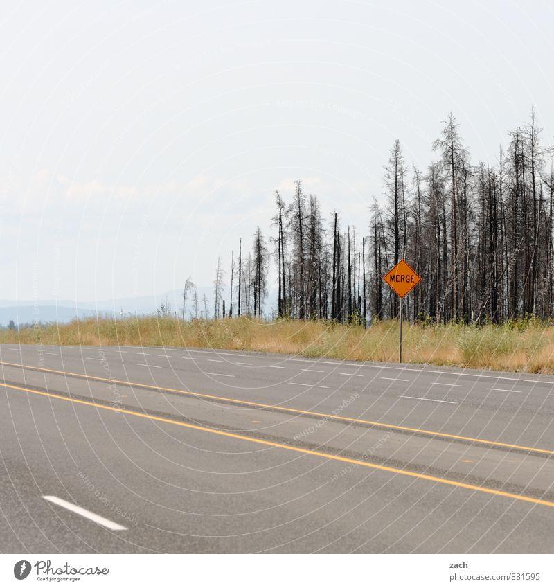Hi, Way! Ausflug Ferne Natur Himmel Wolken Sommer Herbst Baum Gras Sträucher Kanada Nordamerika Verkehrswege Straßenverkehr Autofahren Wege & Pfade Autobahn