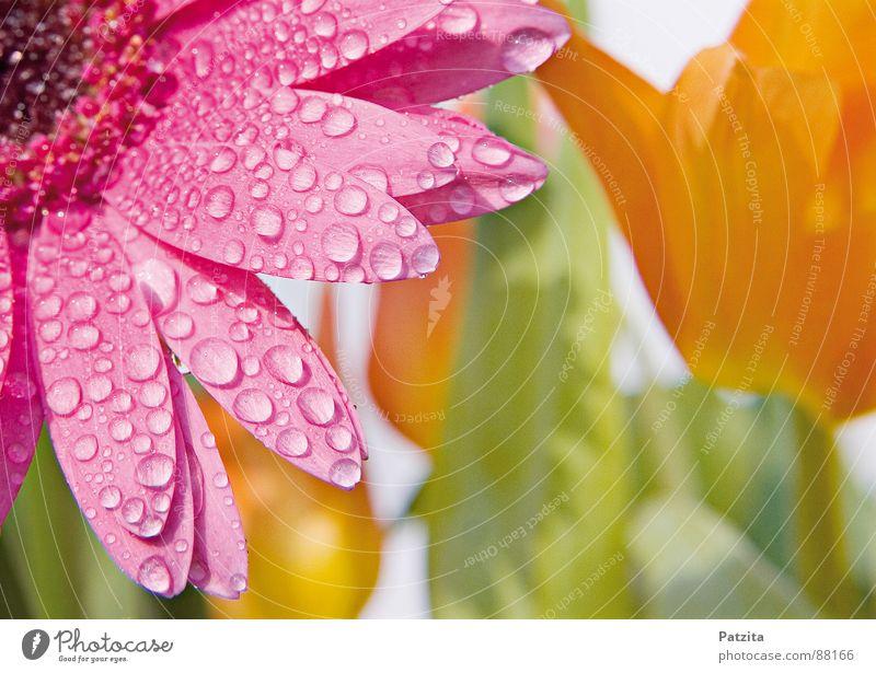 Heile Welt Frühlingsblume Blume Tulpe Gerbera Regen Wassertropfen Wiese Blumenstrauß nass Blüte rosa gelb feucht Muttertag Blumenbeet Gras Hippie Garten
