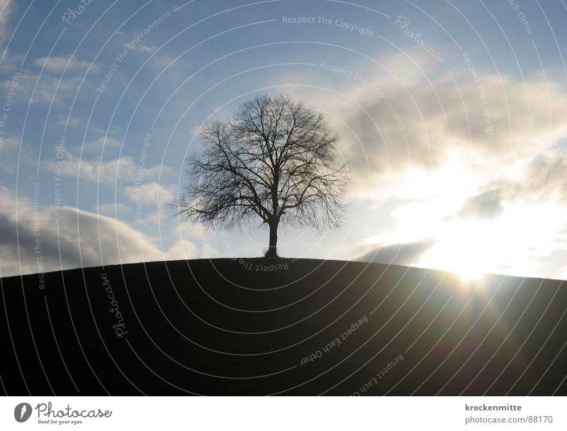 Traumbaum III Natur Himmel Wolken Ferne Wiese Gras Wind Umwelt Rasen Spaziergang Schweiz Ast Mitte Jahreszeiten Weide Baumstamm