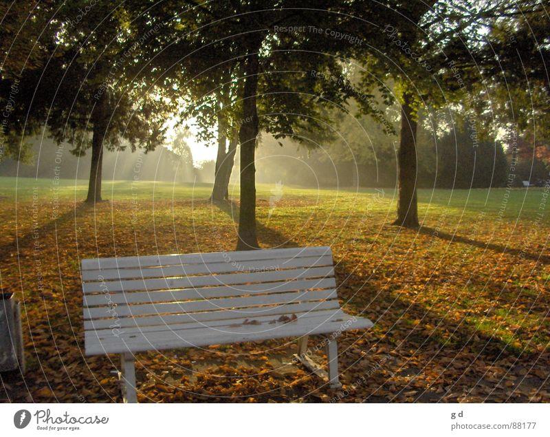 Herbsttraum Deutschland Bank Abenddämmerung Schattenspiel Herbstbeginn Schlosspark